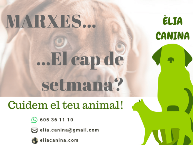 cartell-findes-cat
