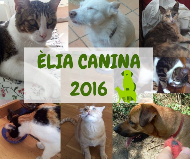 elia-canina-2016